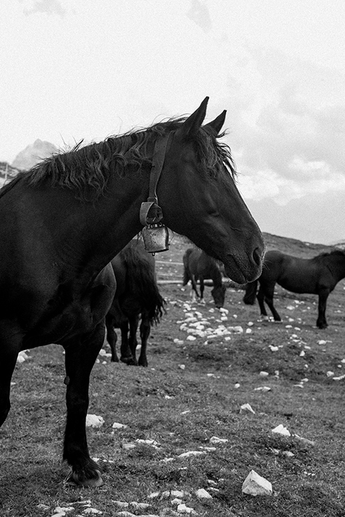 Black and white image of Horses and clouds and Dolomites, Italy.